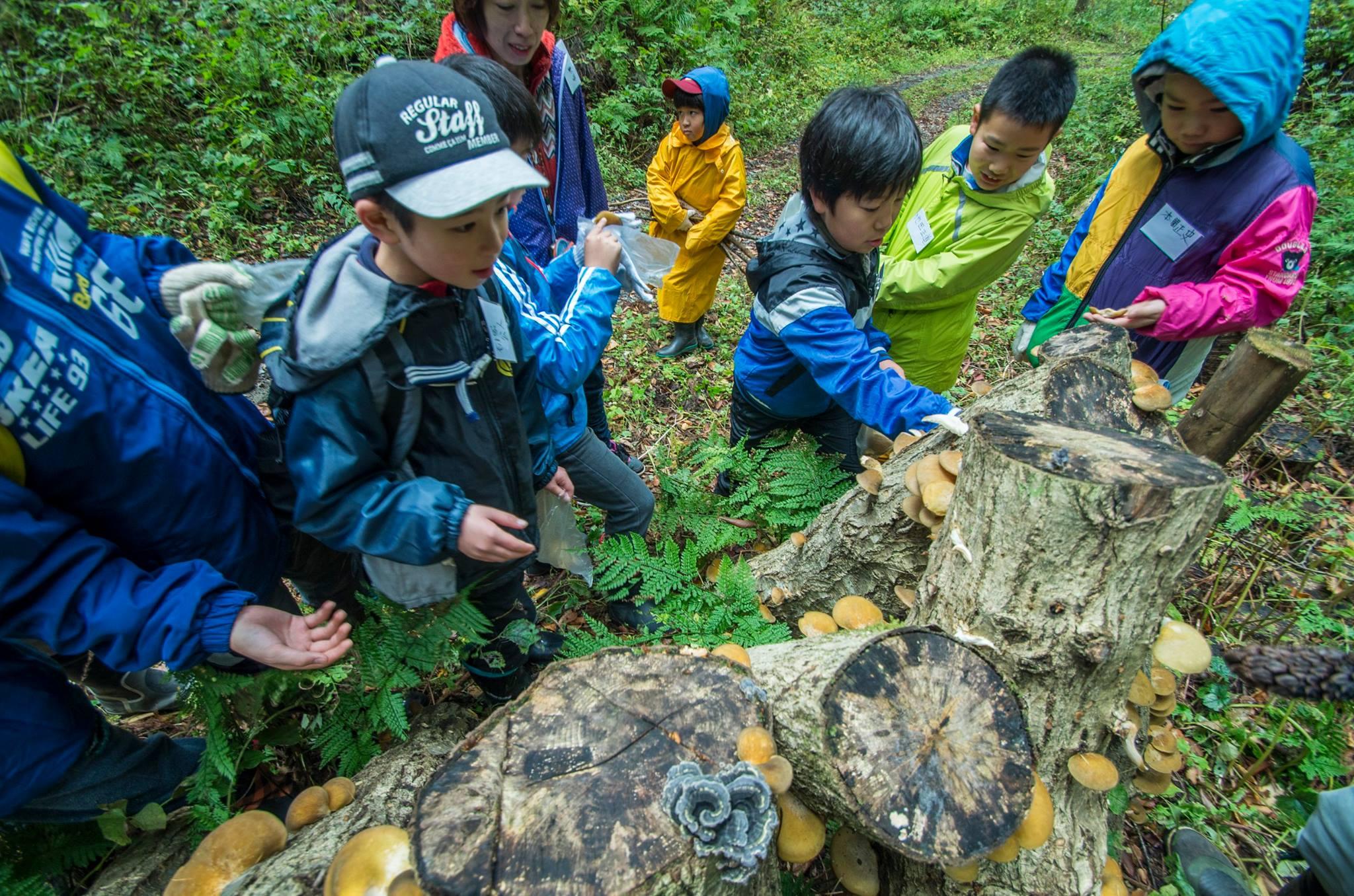 ひゃくねん森でのキノコ栽培