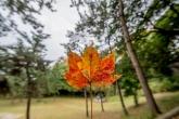 秋の気比神社の境内にて