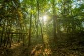 夕方の気比の森
