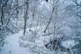 冬の気比の森