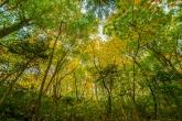 秋の気比の森
